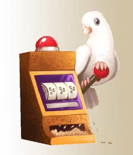 fruitomaat het meest verslavend - gokkende duif