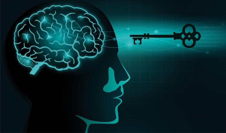 Hersenen en neuroplasticiteit